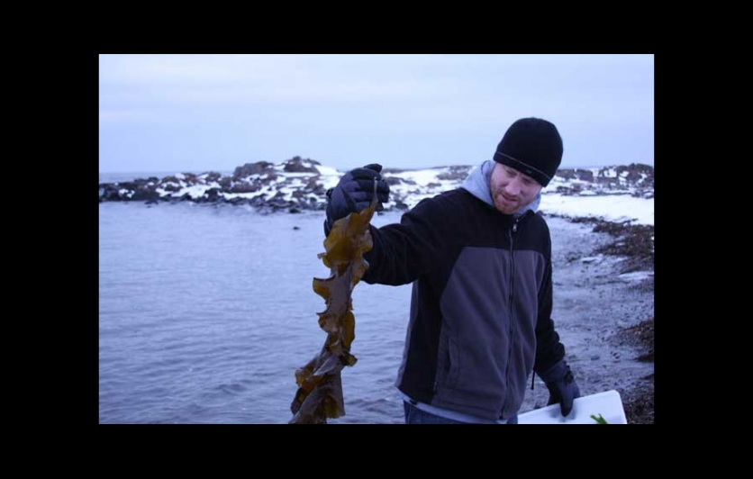 Chef holding up harvested seaweed