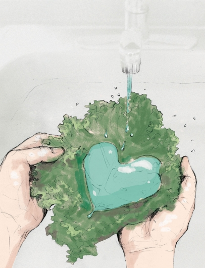 Heart made of water in lettuce