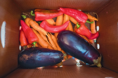 Carrots, peppers and eggplant