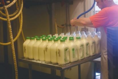 Brookford-Farm-Milk-Bottles