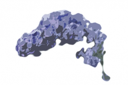 Common lilac illustration