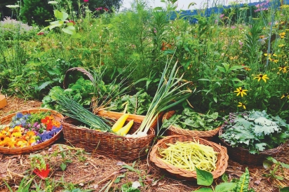 Permaculture Outside