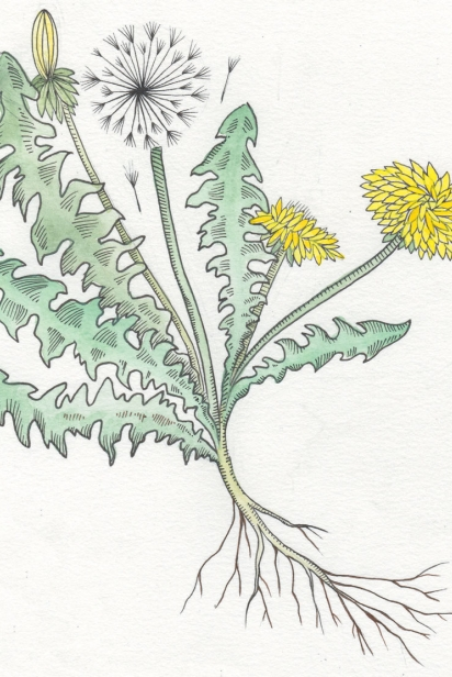Illustrated Plants