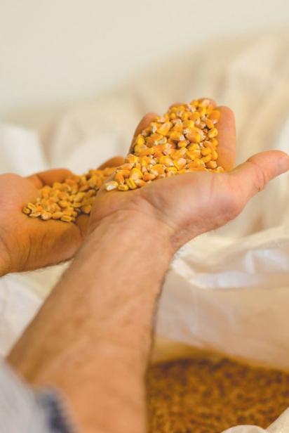 Tamworth-Corn