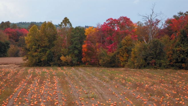 A Field in the Fall