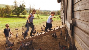 Tending the chickens