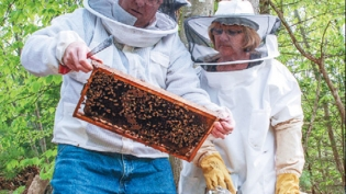 Dan and JoAnne Phillips of Rocky Hollow Honey